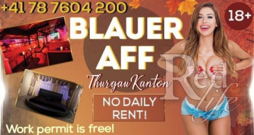 the-swiss-blauer-aff-club-rent-free-big-2